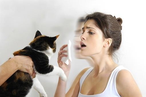Pet Md Cat Allergies